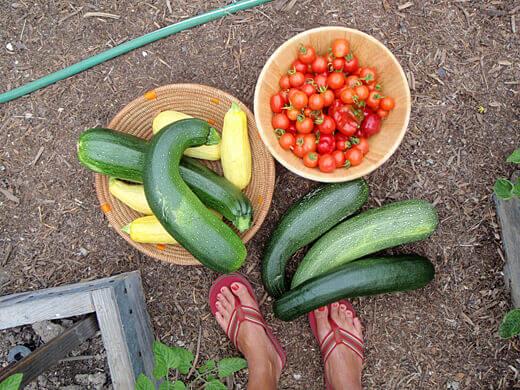 Beginning my new life as a micro farmer