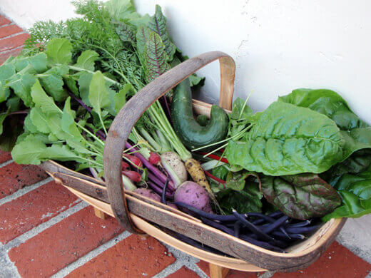 Fresh harvest of salad greens and veggies