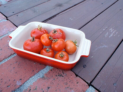 High Country, Oregon Spring and Siberian tomatoes