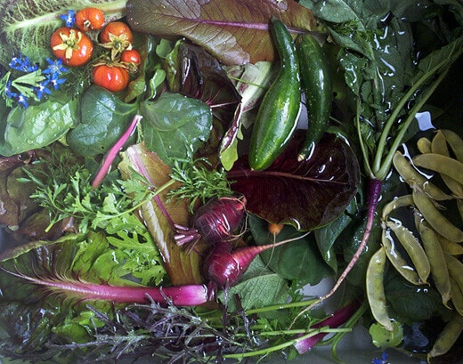 Salad fixins from the garden