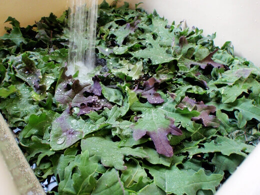 Wash and thoroughly dry kale