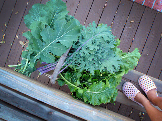 Kale, collard greens, and turnip greens