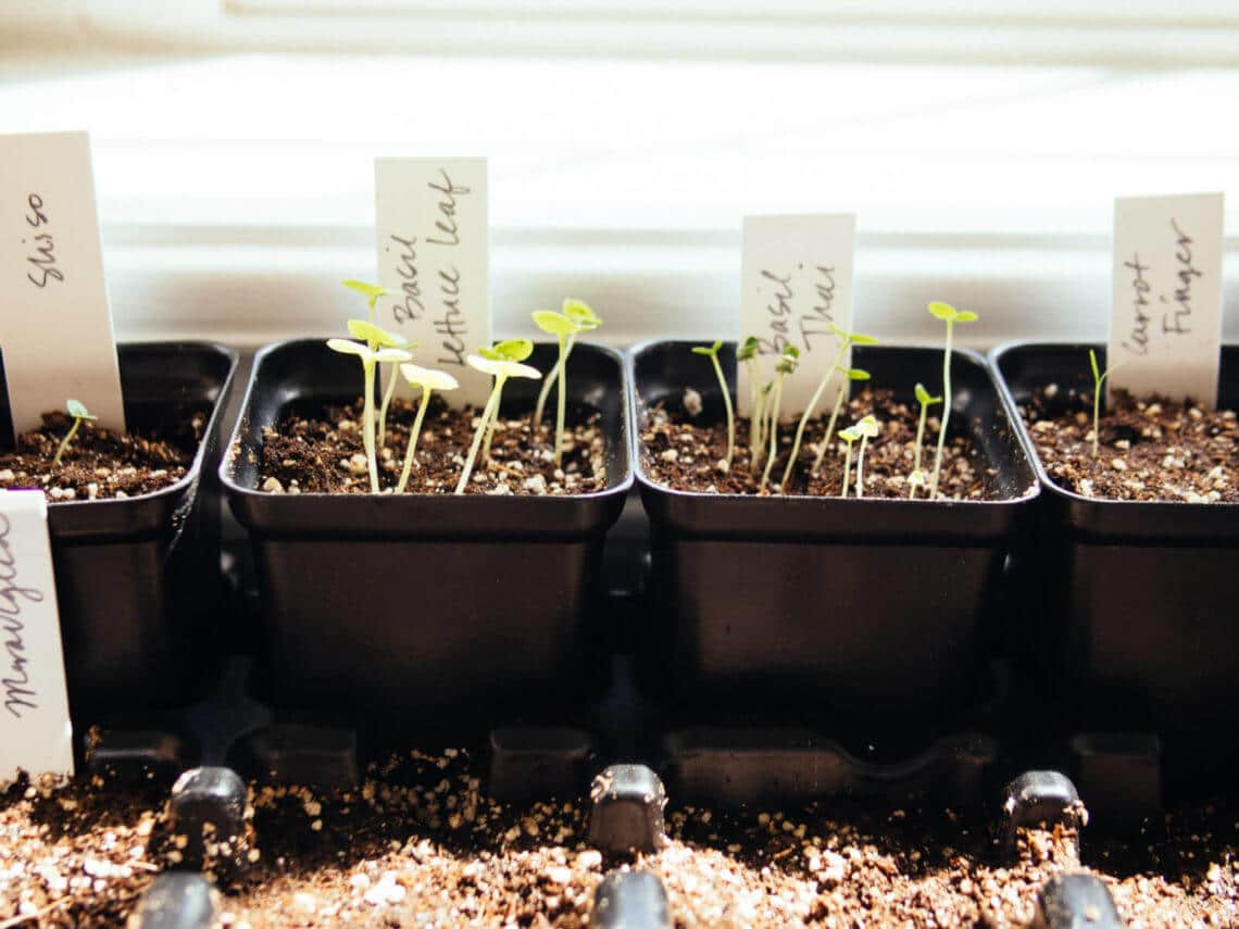 The no-brainer guide to starting seeds indoors