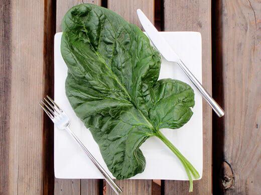 Italian Gigante d'Inverno spinach