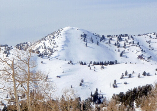 2,000 feet vertical of untracked powder