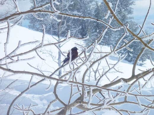 A good sign on a bluebird morning