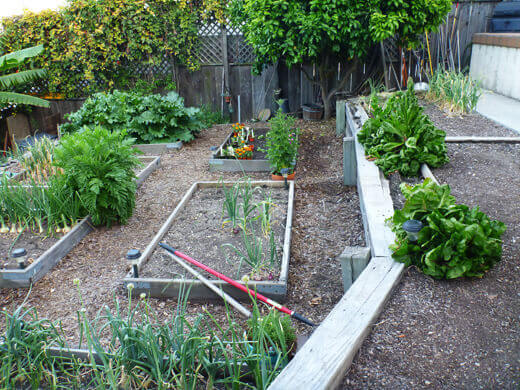 Upper and main levels of vegetable garden
