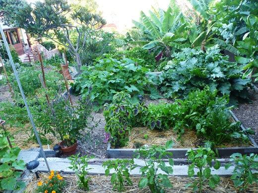 Main vegetable plot