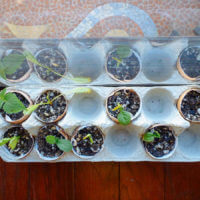 Starting Seeds in Eggshells… Cute and Yes, Even Practical