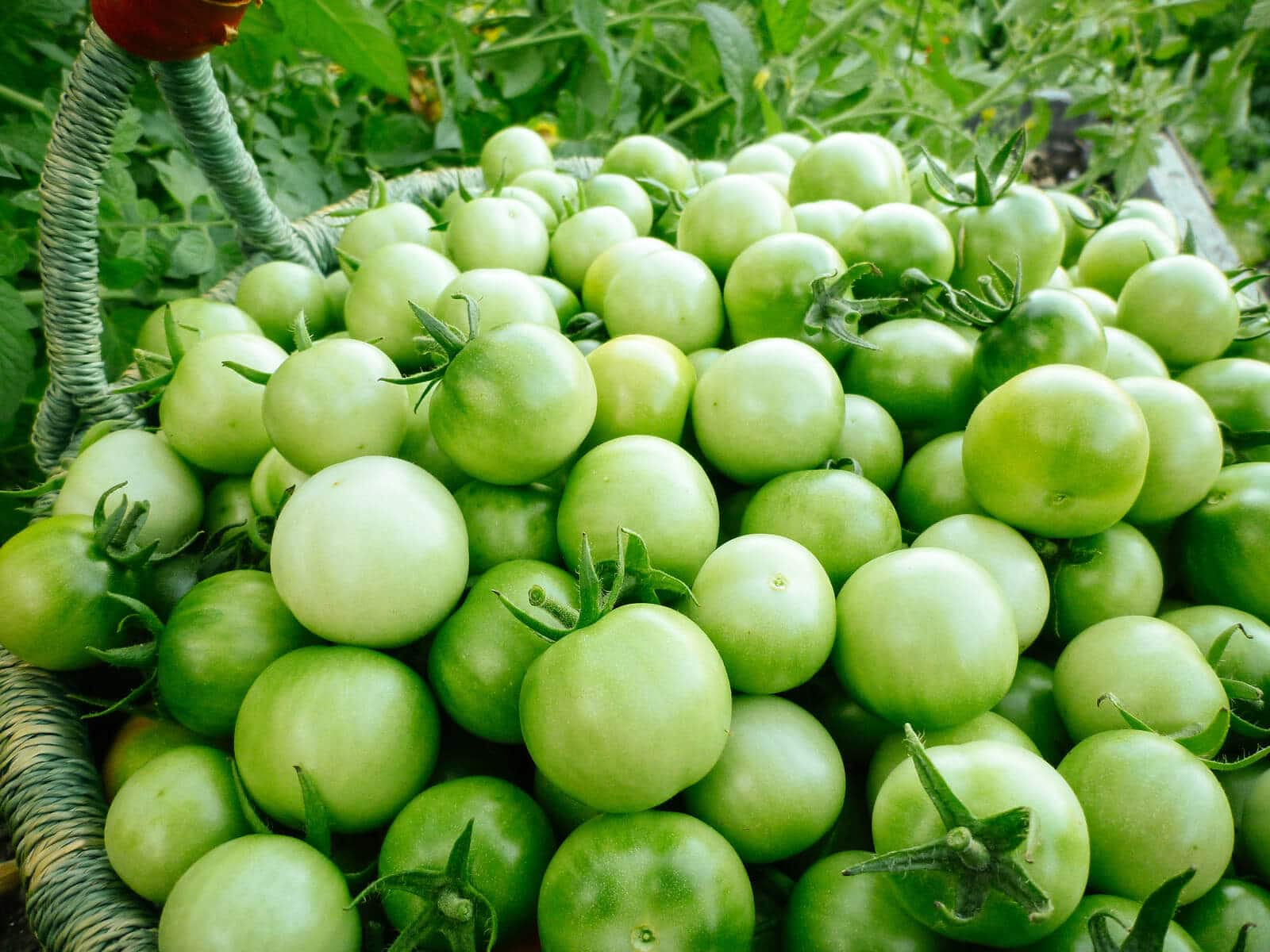 Slice that mountain of green tomatoes