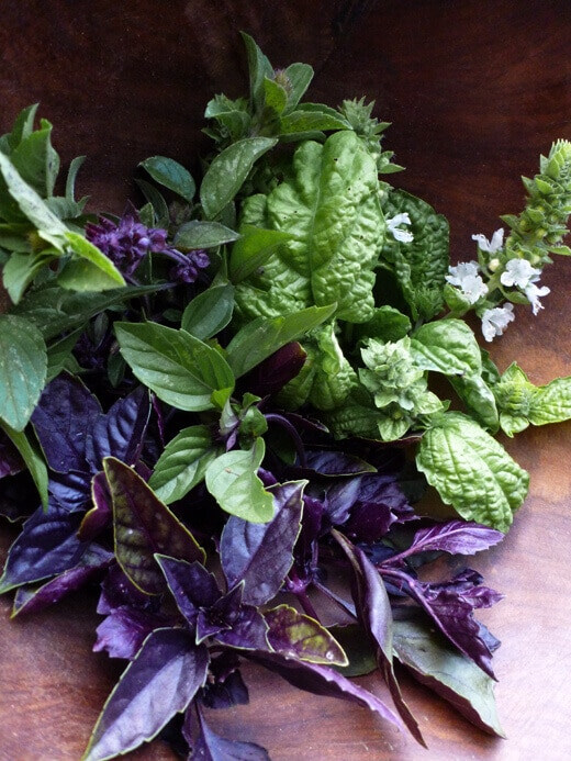 A medley of basil from the garden