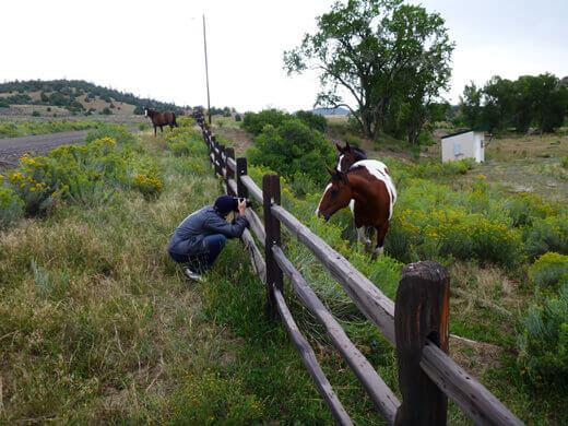 Sweet horses in Pagosa Springs