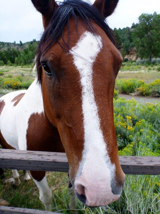 Sweet horse in Pagosa Springs