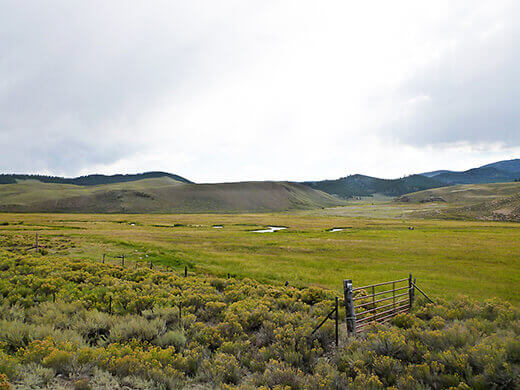 Verdant Colorado farmland