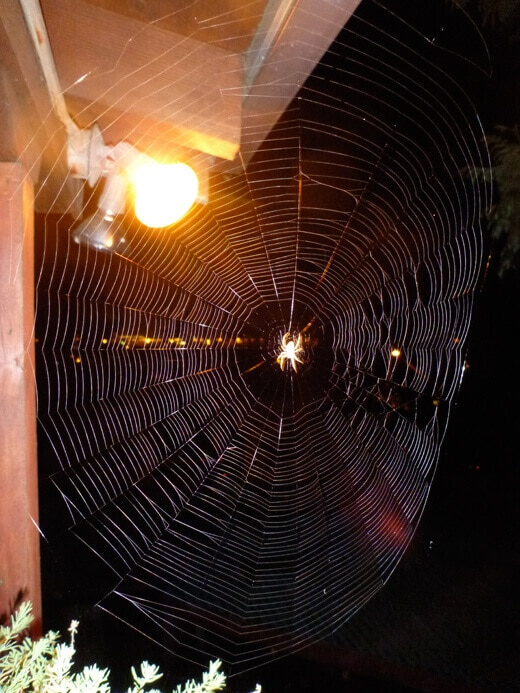 Beautiful spider web above my front porch