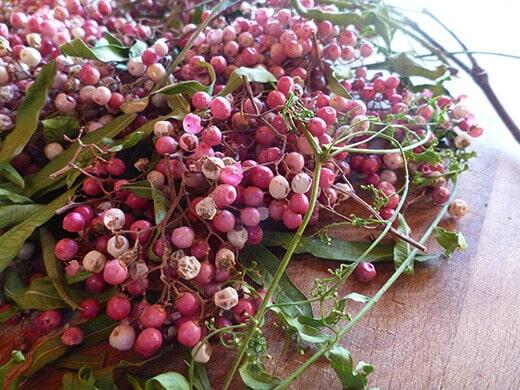 Peruvian pepper berries