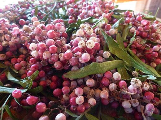Fresh Peruvian pepper berries