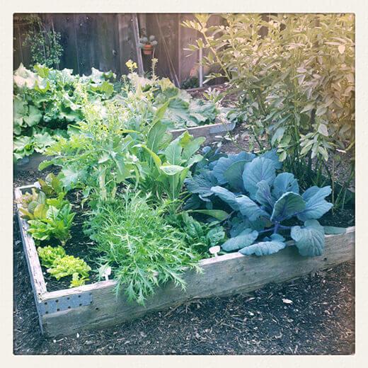The saving grace of the garden