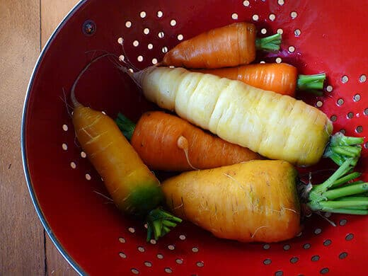 Colorful carrot harvest