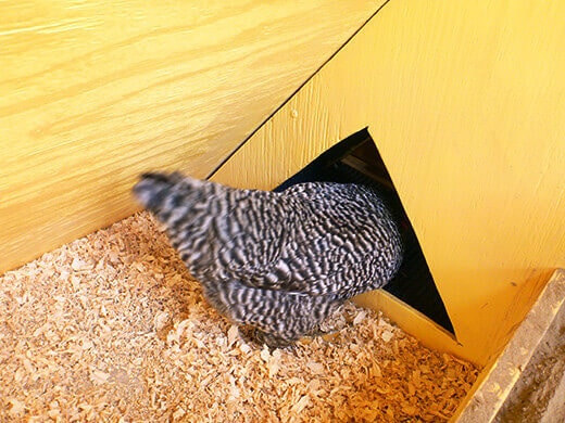 Kimora goes into the egg box