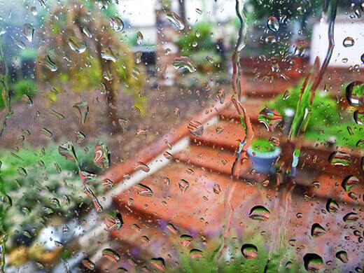 Rainy day in the garden