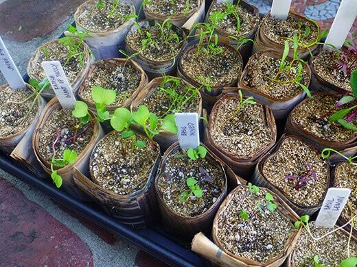 Spring and summer seedlings