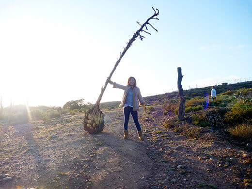 Scavenging for dried yuccas