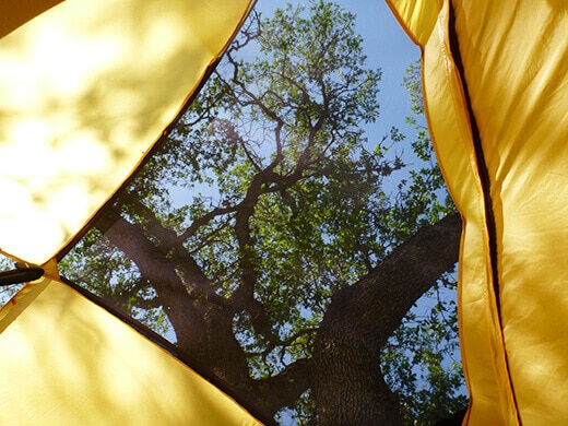 Waking up to oaks above my tent