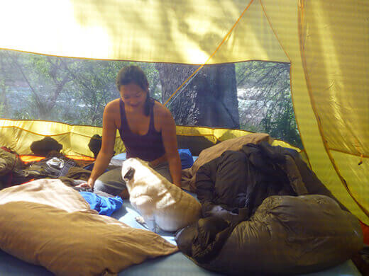 Waking up with pugs in the tent