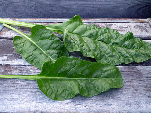 Perpetual spinach