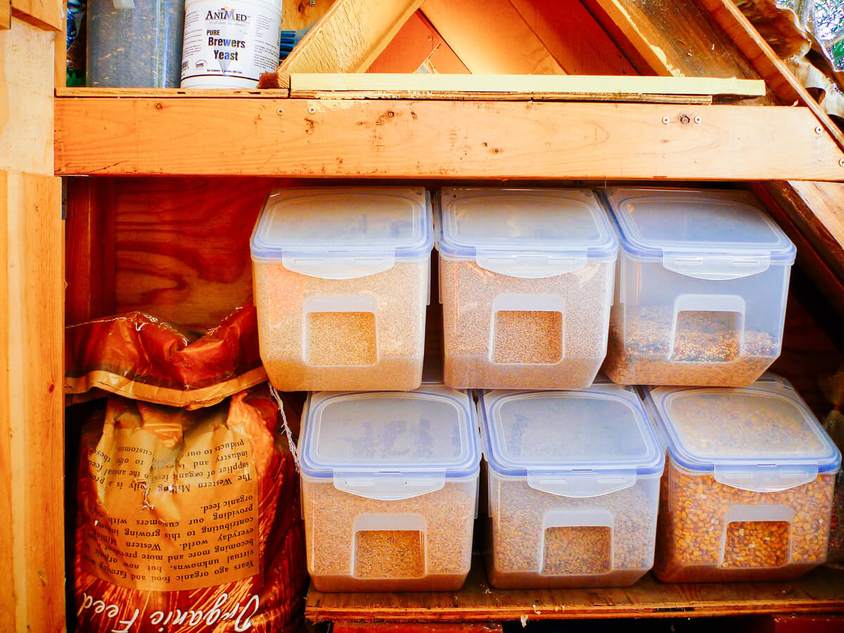 Whole grains and seeds used for homemade chicken feed