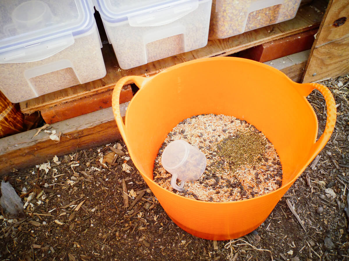 Mixing up grains, legumes, and seeds for my homemade chicken feed