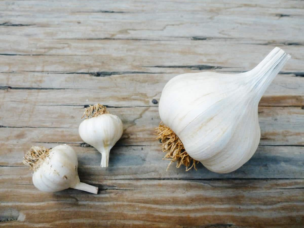 World's smallest garlic
