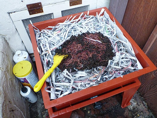 Add worms to the vermicomposting bin