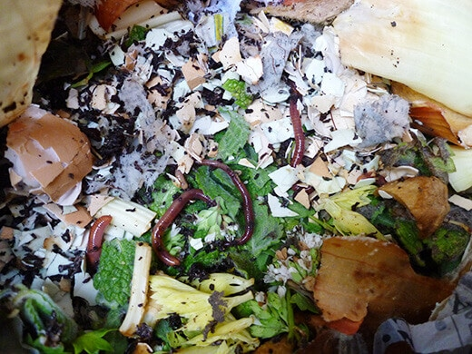 Worms working through the food scraps