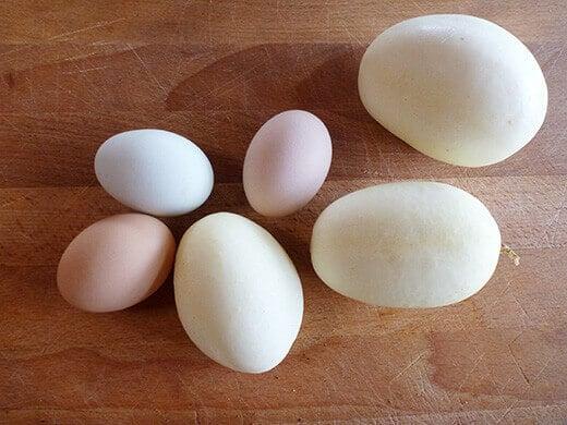 Dragon's Egg cucumbers with backyard eggs
