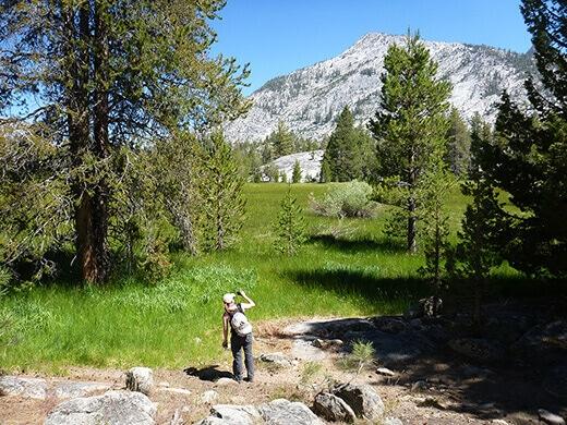 Granite peaks over a lush green meadow