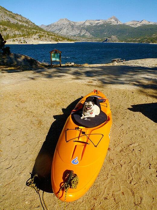 My pug enjoying life on Florence Lake