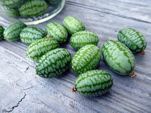 Mexican Sour Gherkins look like lilliputian watermelons