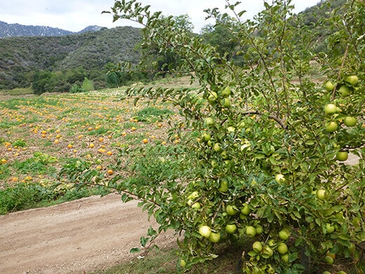 Apple orchards and pumpkin patches