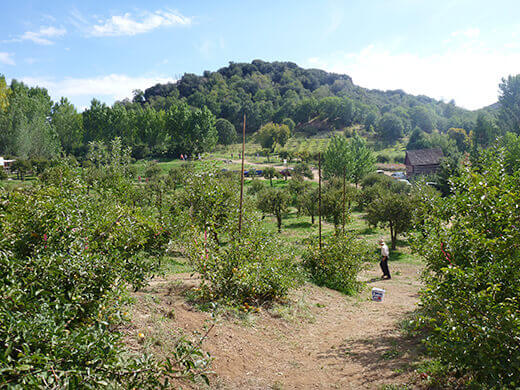Apple orchard at Riley's Farm