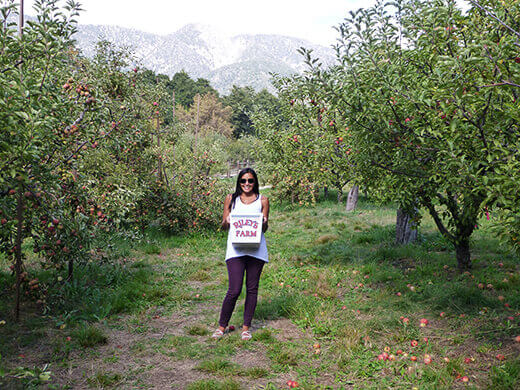 U-pick apple orchard