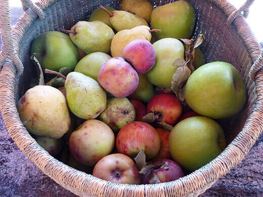 A mountain of fresh, ripe apples and pears