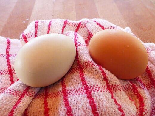 Super fresh backyard eggs