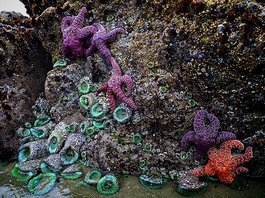 Starfish and sea anemones.