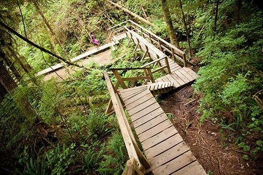 Schooner Beach Trail through the rainforest.