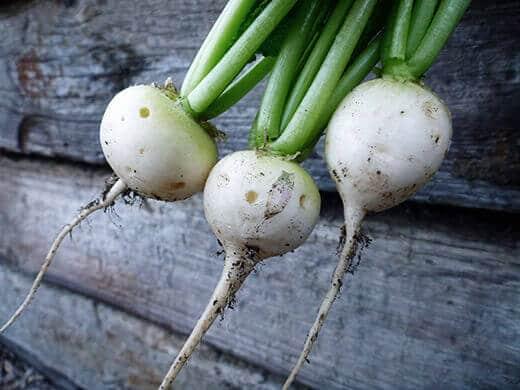 White Hailstone radishes