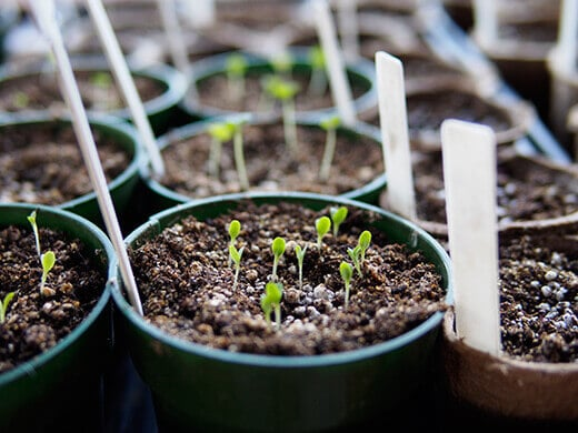 New seedlings sprouting