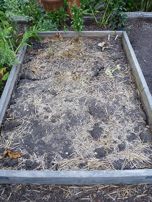Dry clay soil at the end of a season