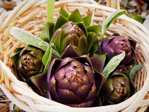 Purple of Romagna artichokes